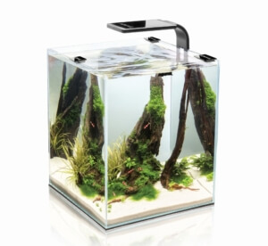 Nano Aquarium Tipps Tricks Top Produkte