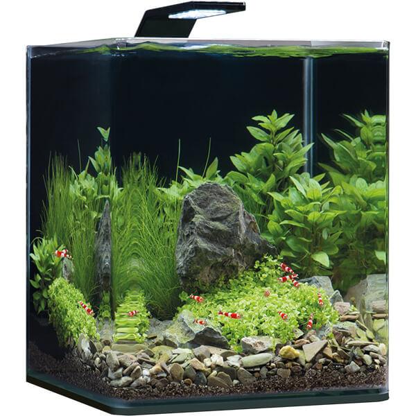 20 Liter Aquarium