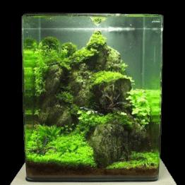 Nano-Aquascape