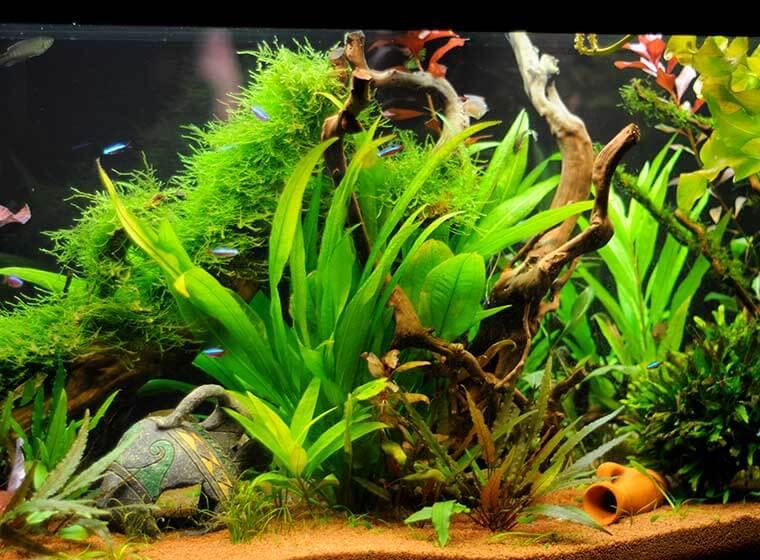 Vor und Nachteile Süßwasseraquarium