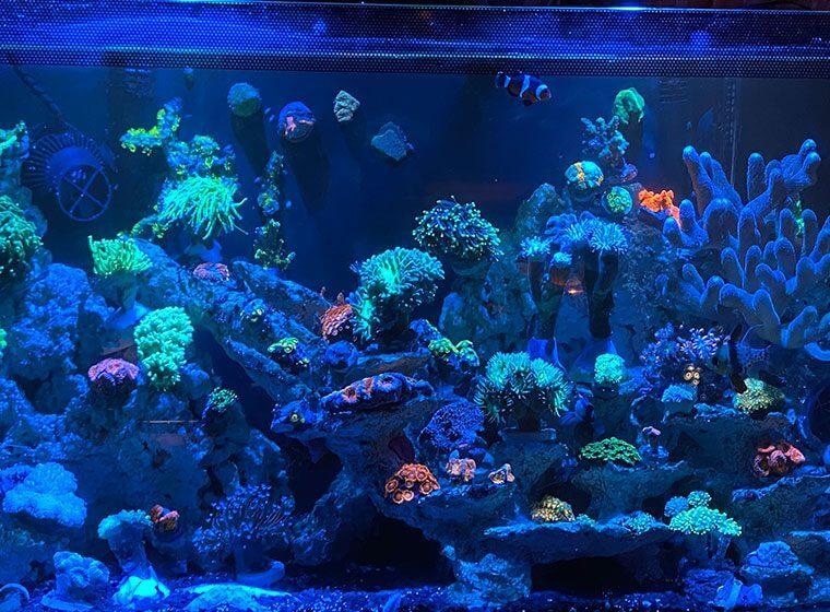 Vor und Nachteile Meerwasseraquarium